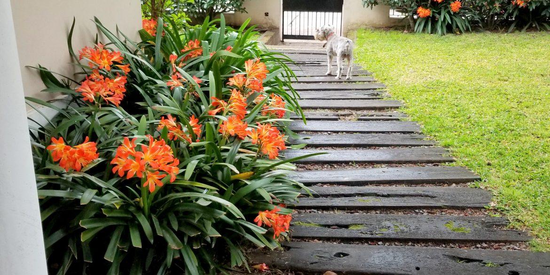 jardin camino